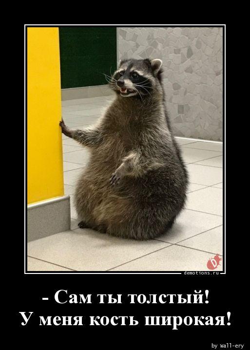 - Сам ты толстый! У меня кость широкая!