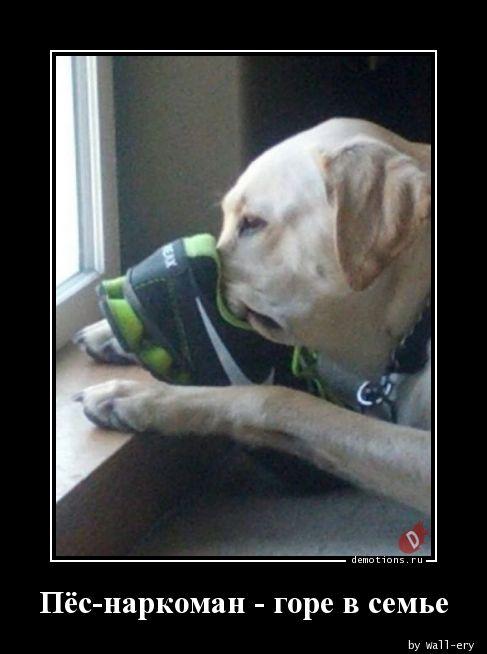 Пёс-наркоман - горе в семье