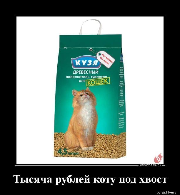 Тысяча рублей коту под хвост