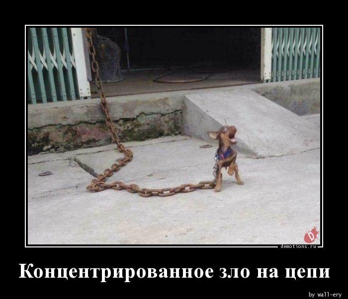 Концентрированное зло на цепи