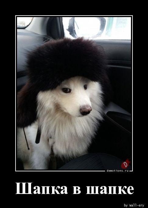 Шапка в шапке