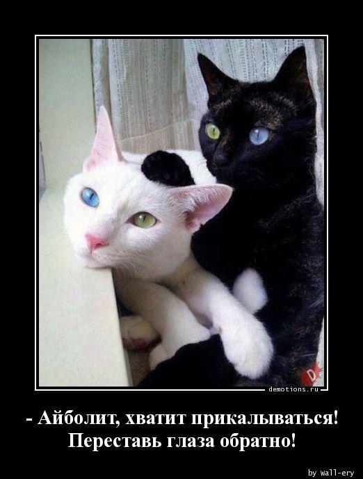 - Айболит, хватит прикалываться! Переставь глаза обратно!