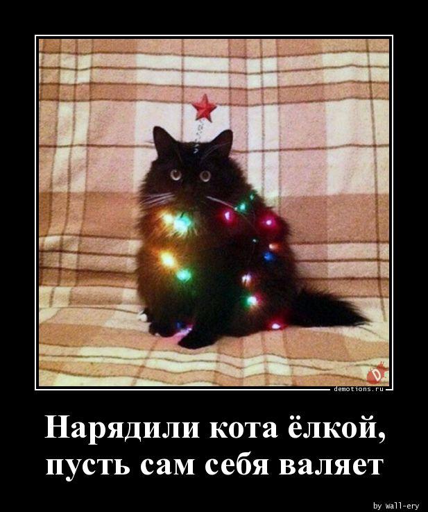 Нарядили кота ёлкой, пусть сам себя валяет