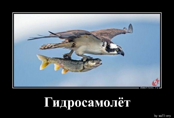 Гидросамолёт