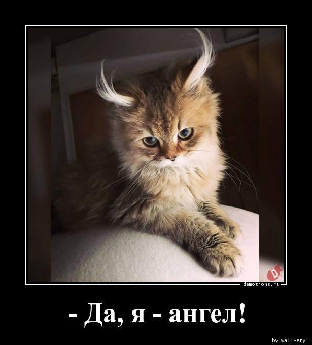 - Да, я - ангел!