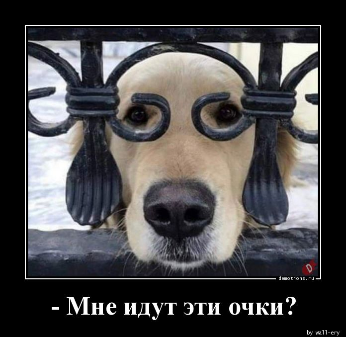 - Мне идут эти очки?