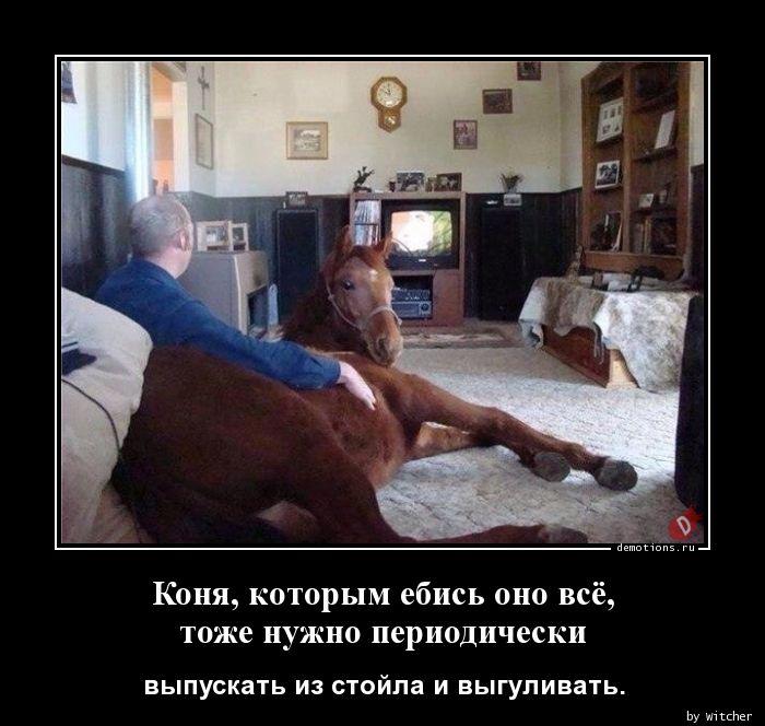 Коня, которым ебись оно всё,тоже нужно периодически