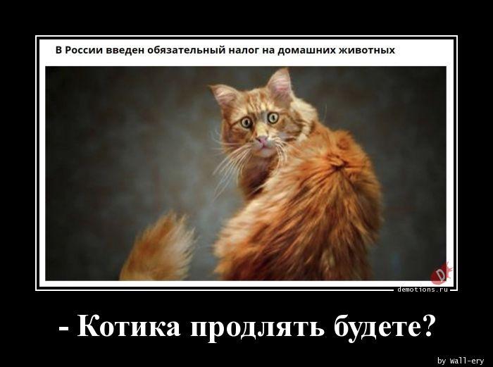 - Котика продлять будете?