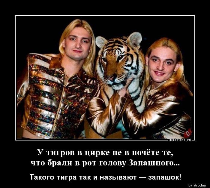 У тигров в цирке не в почёте те, что брали в рот голову Запашного...