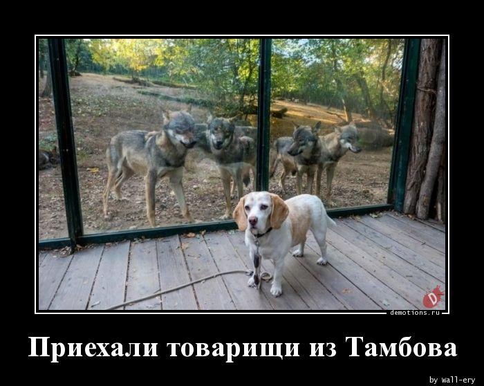 Приехали товарищи из Тамбова