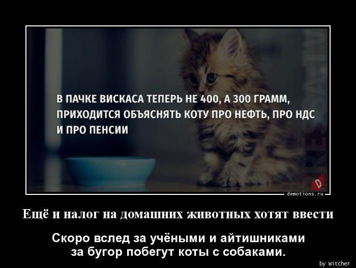 Ещё и налог на домашних животных хотят ввести