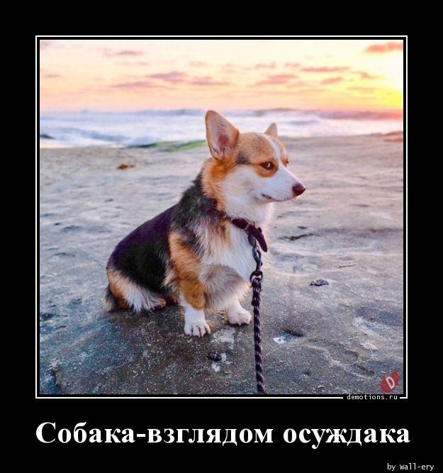 Собака-взглядом осуждака