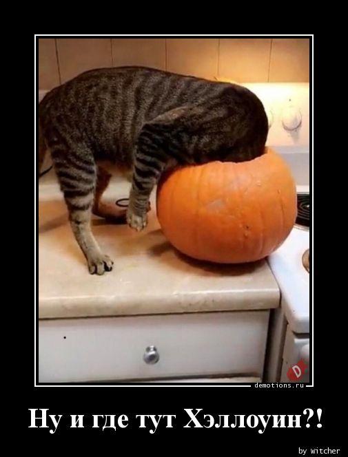 Ну и где тут Хэллоуин?!