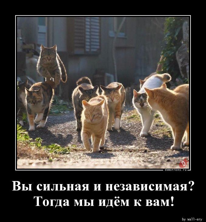 Вы сильная и независимая? Тогда мы идём к вам!