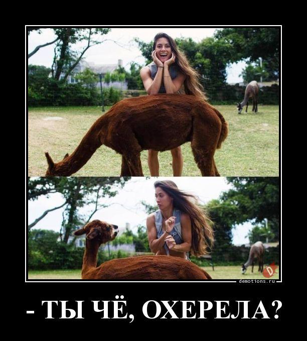 - ТЫ ЧЁ, ОХЕРЕЛА?