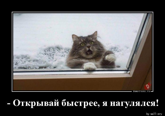 - Открывай быстрее, я нагулялся!