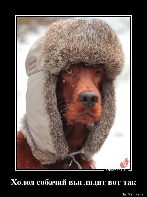 Холод собачий выглядит вот так
