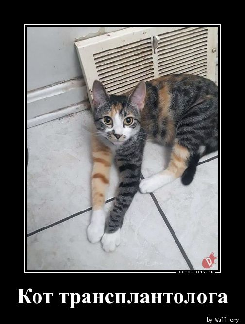 Кот трансплантолога