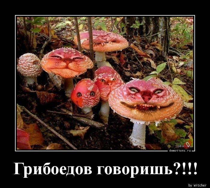 Грибоедов говоришь?!!!