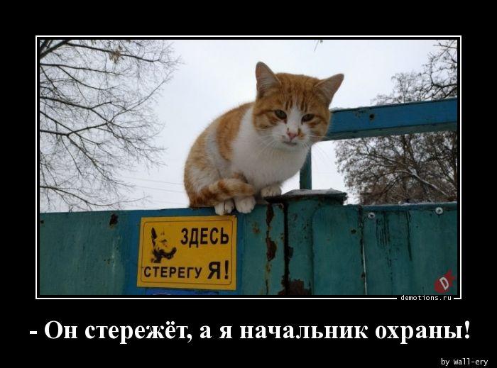 - Он стережёт, а я начальник охраны!