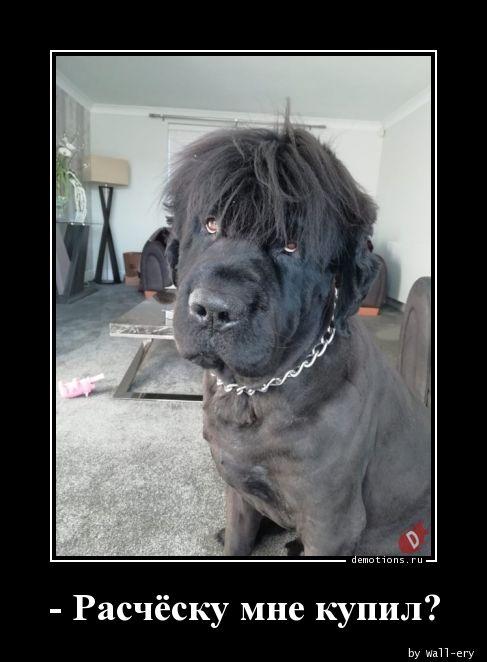 - Расчёску мне купил?