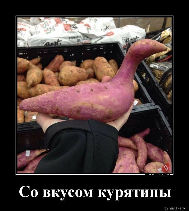 Со вкусом курятины