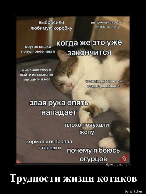Трудности жизни котиков