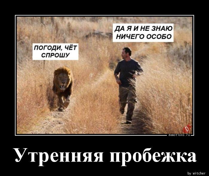 картинка лев бежит за мужчиной подожди чет спрошу можно
