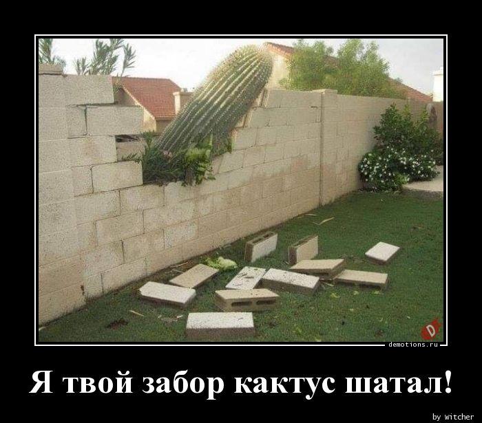 Я твой забор кактус шатал!