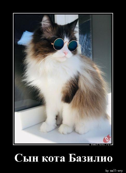 Сын кота Базилио