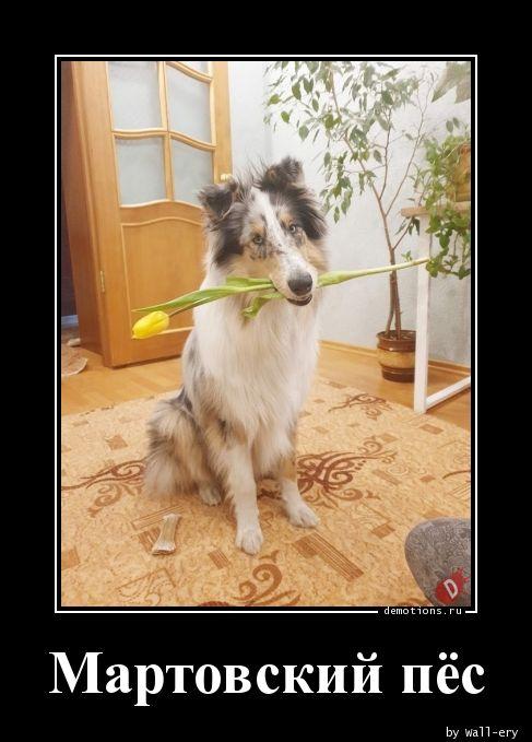 Мартовский пёс