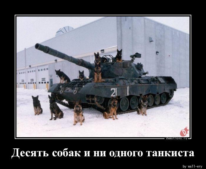 Десять собак и ни одного танкиста