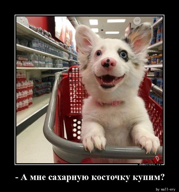 - А мне сахарную косточку купим?