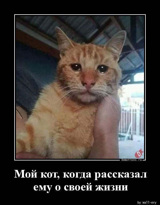 Мой кот, когда рассказал ему о своей жизни
