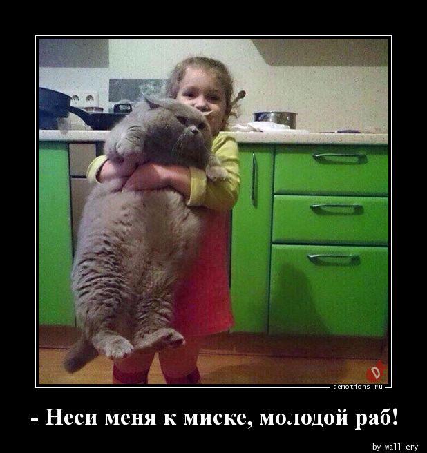 - Неси меня к миске, молодой раб!