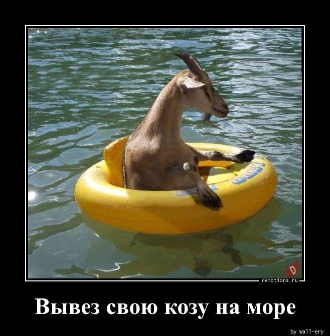 Вывез свою козу на море