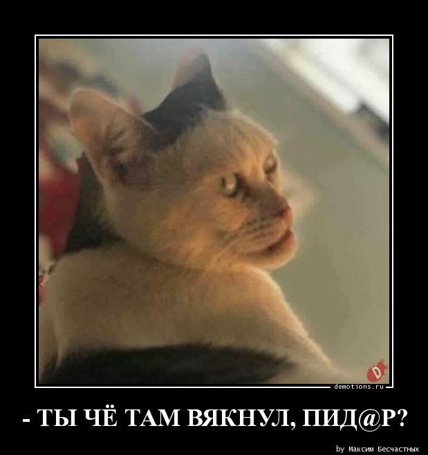 - ТЫ ЧЁ ТАМ ВЯКНУЛ, ПИД@Р?