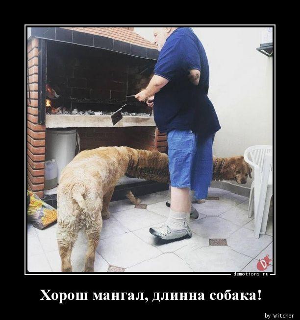 Хорош мангал, длинна собака!