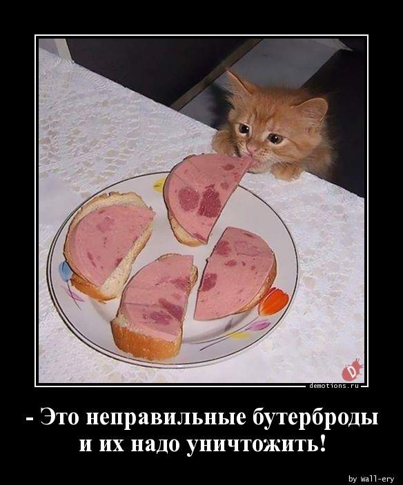 - Это неправильные бутерброды и их надо уничтожить!