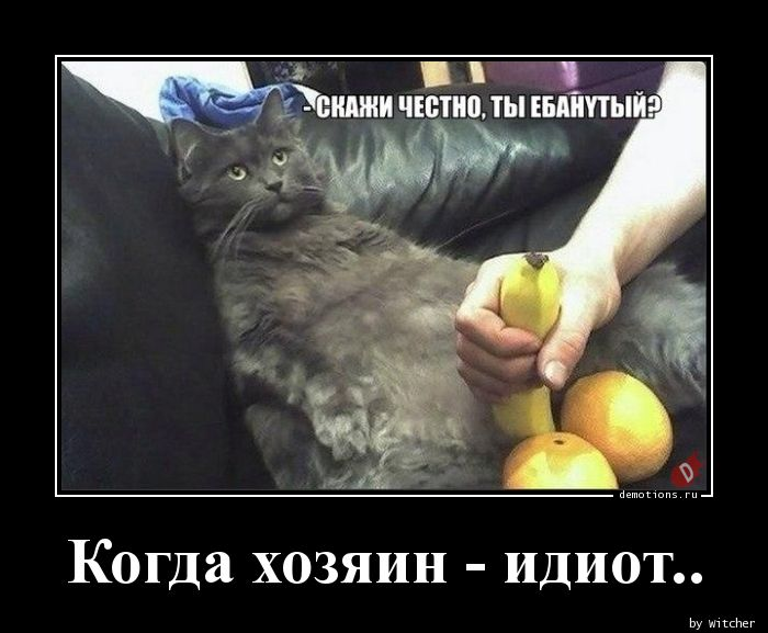 Когда хозяин - идиот..