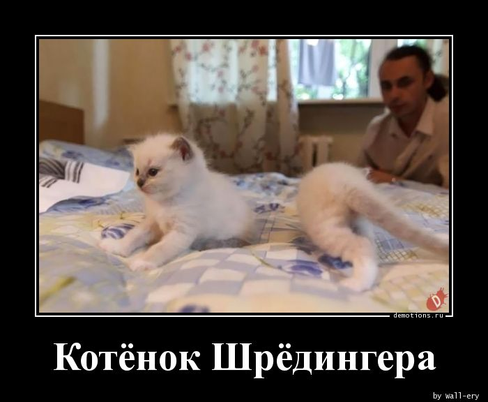 Котёнок Шрёдингера