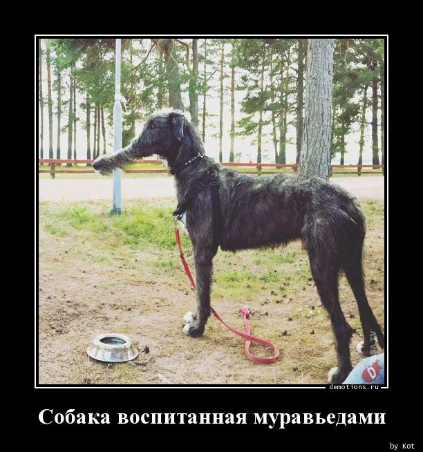 Собака воспитанная муравьедами