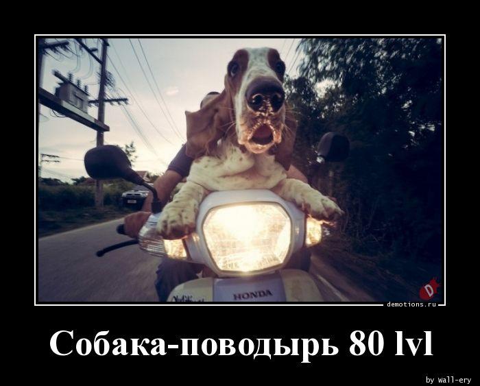 Собака-поводырь 80 lvl