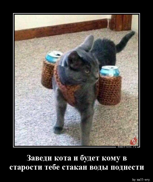 Заведи кота и будет кому в старости тебе стакан воды поднести