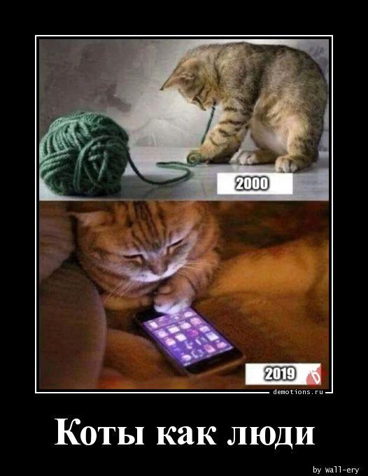 Коты как люди