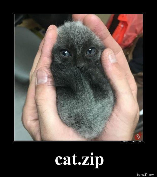 cat.zip