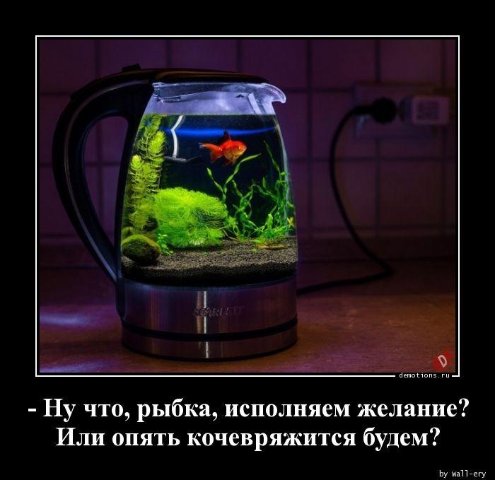 - Ну что, рыбка, исполняем желание? Или опять кочевряжится будем?