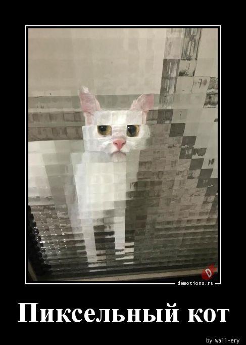 Пиксельный кот