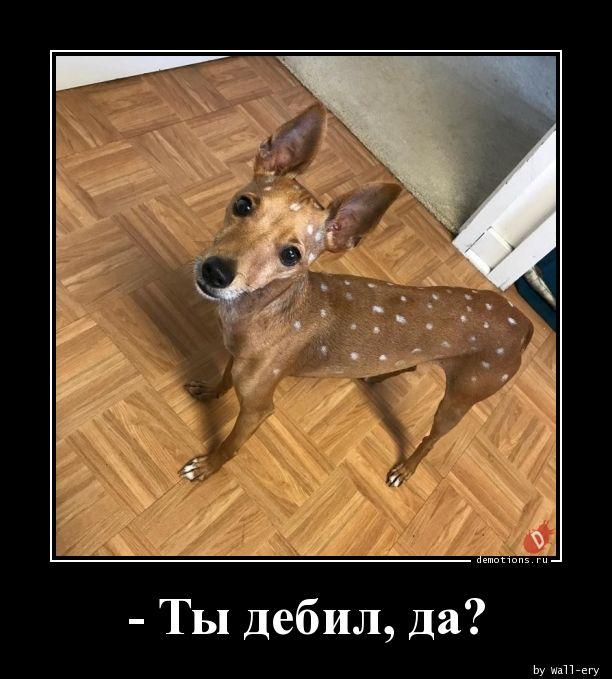 - Ты дебил, да?