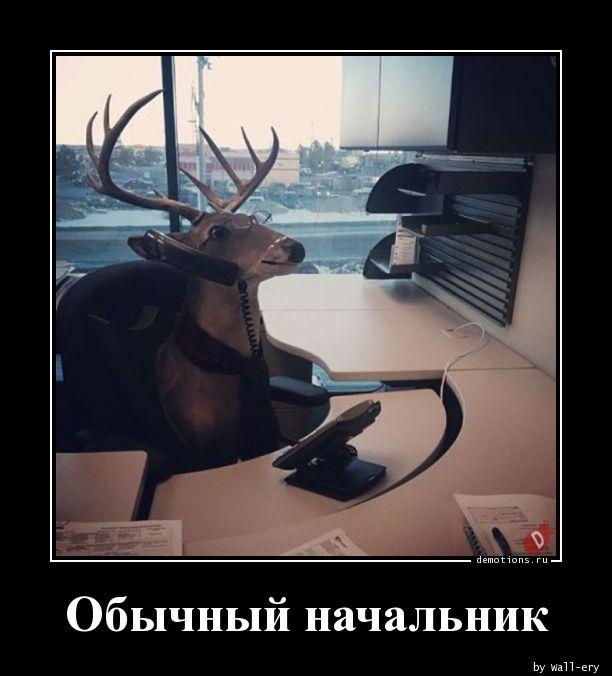 Обычный начальник